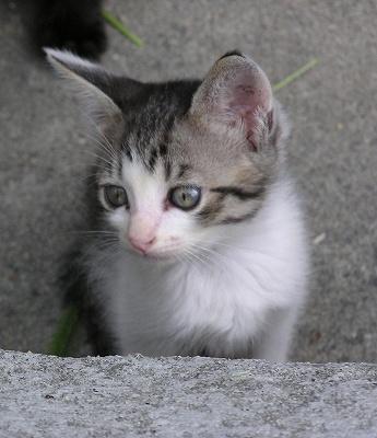これぞ、子猫の中の子猫