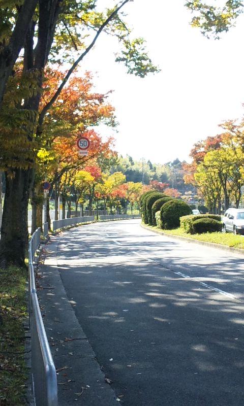 秋色散歩道