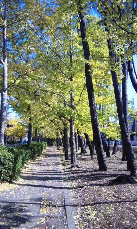 秋色散歩道3