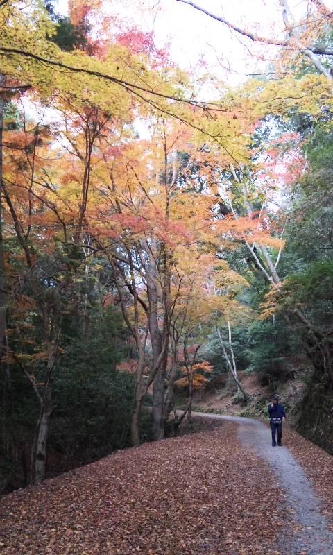 秋色散歩道4